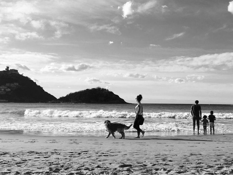 Beach Blackandwhite Dog Domestic Animals Leisure Activity Pets San Sebastian San Sebastian Beach Sea Water