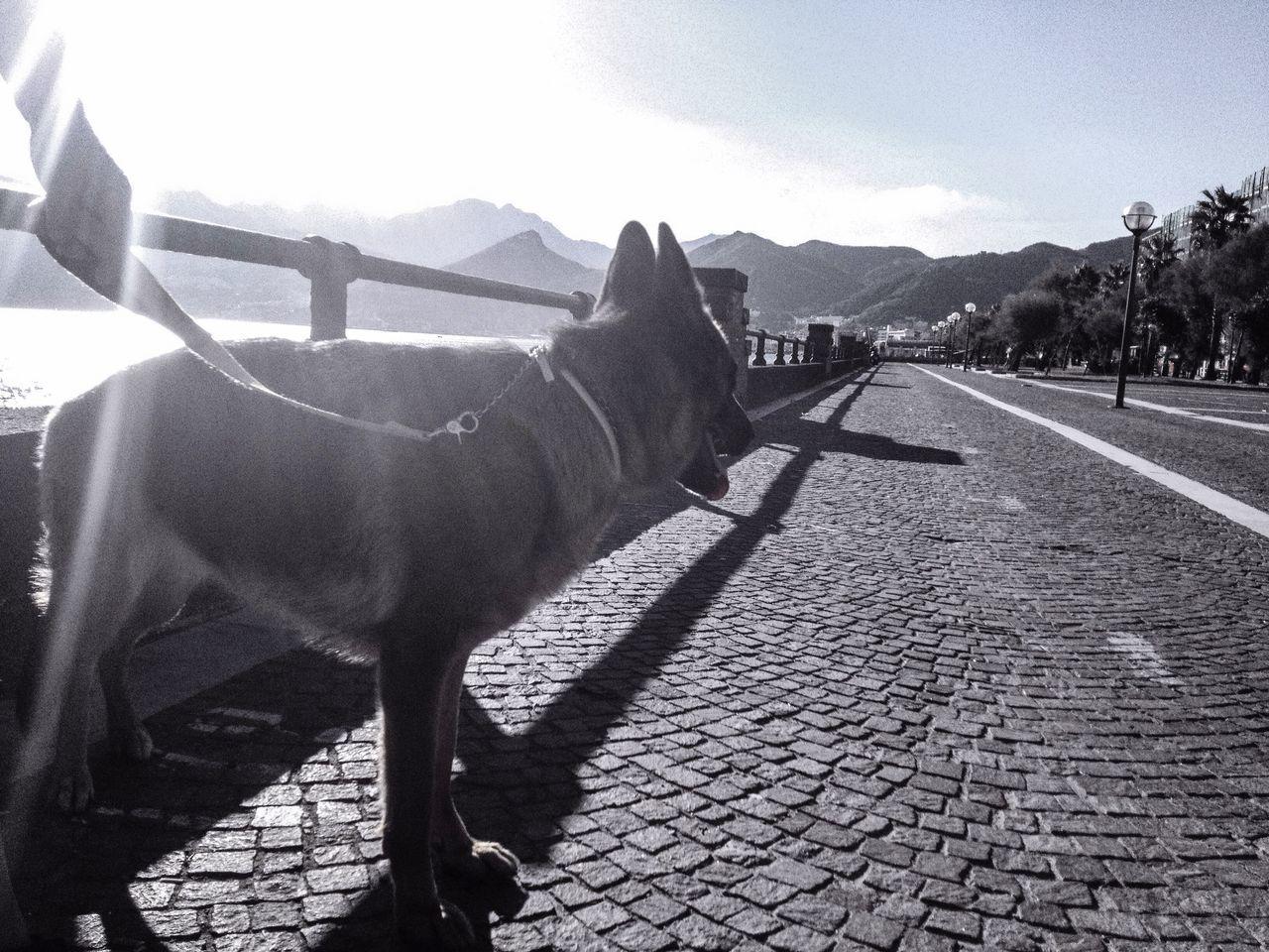 Dog Sky Sea Sky And Clouds Particular Attitude Good Dog