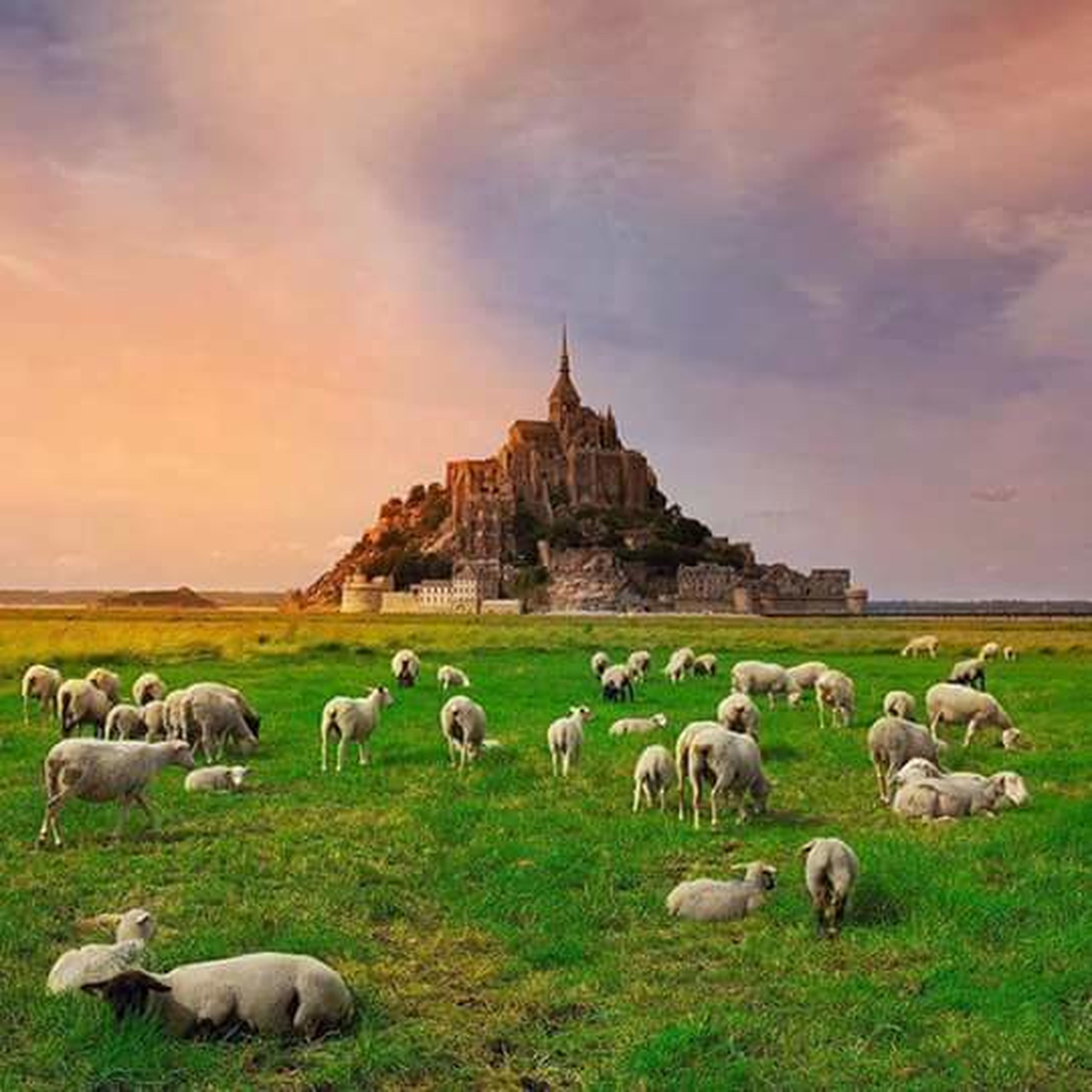 animal themes, sky, grass, cloud - sky, sheep, field, nature, built structure, landscape, wildlife, cloud, medium group of animals, building exterior, bird, outdoors, animals in the wild, no people, architecture, day