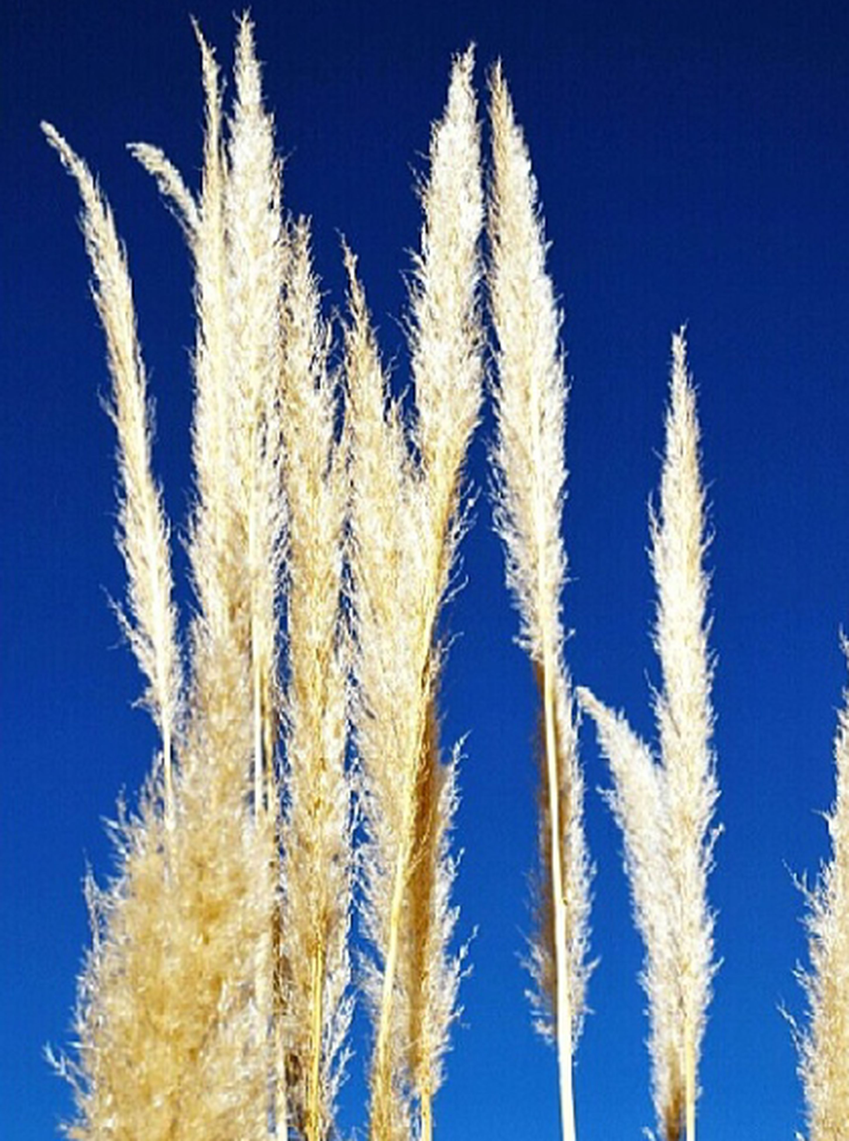 blue, clear sky, growth, low angle view, nature, beauty in nature, close-up, stem, copy space, plant, tranquility, day, outdoors, no people, freshness, sunlight, flower, sky, fragility, growing