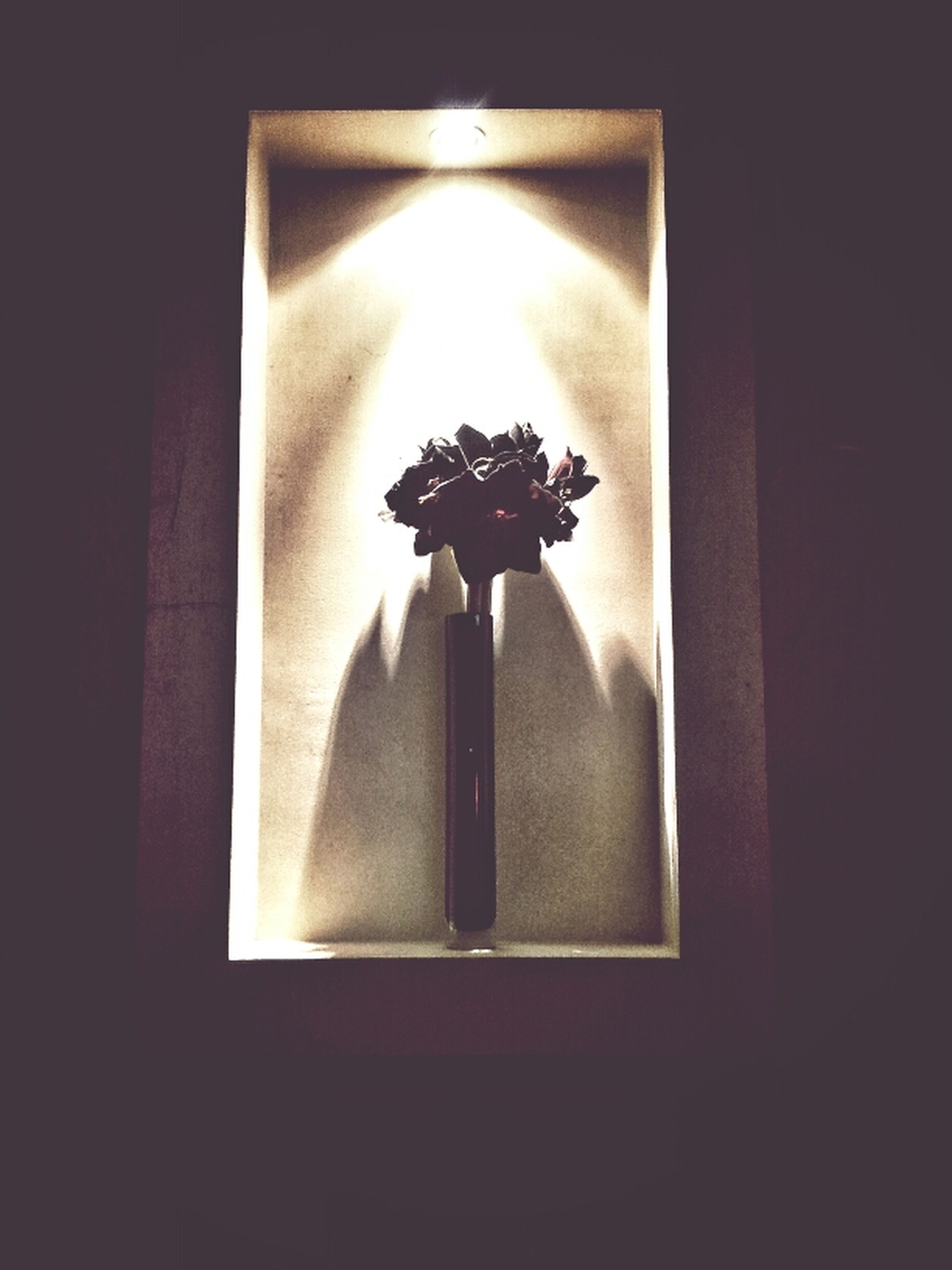 indoors, flower, home interior, vase, close-up, glass - material, wall - building feature, decoration, dark, window, still life, darkroom, no people, candle, transparent, studio shot, table, fragility, lighting equipment, decor