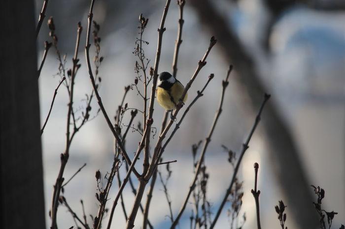 Bird Birds Branch Day Outdoors Snow Tomtit Tomtit In Birdhouse Winter