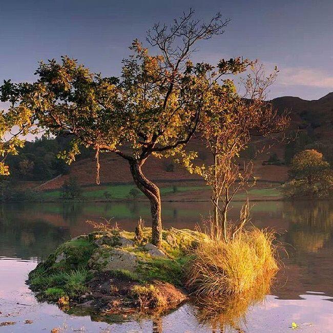 Little oak. Rydal Cumbria Lakedistrict Landscape nature www.damianshields.com