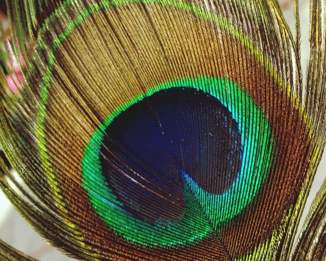 Beauty Bird Plumaspavoreal Multi Colored