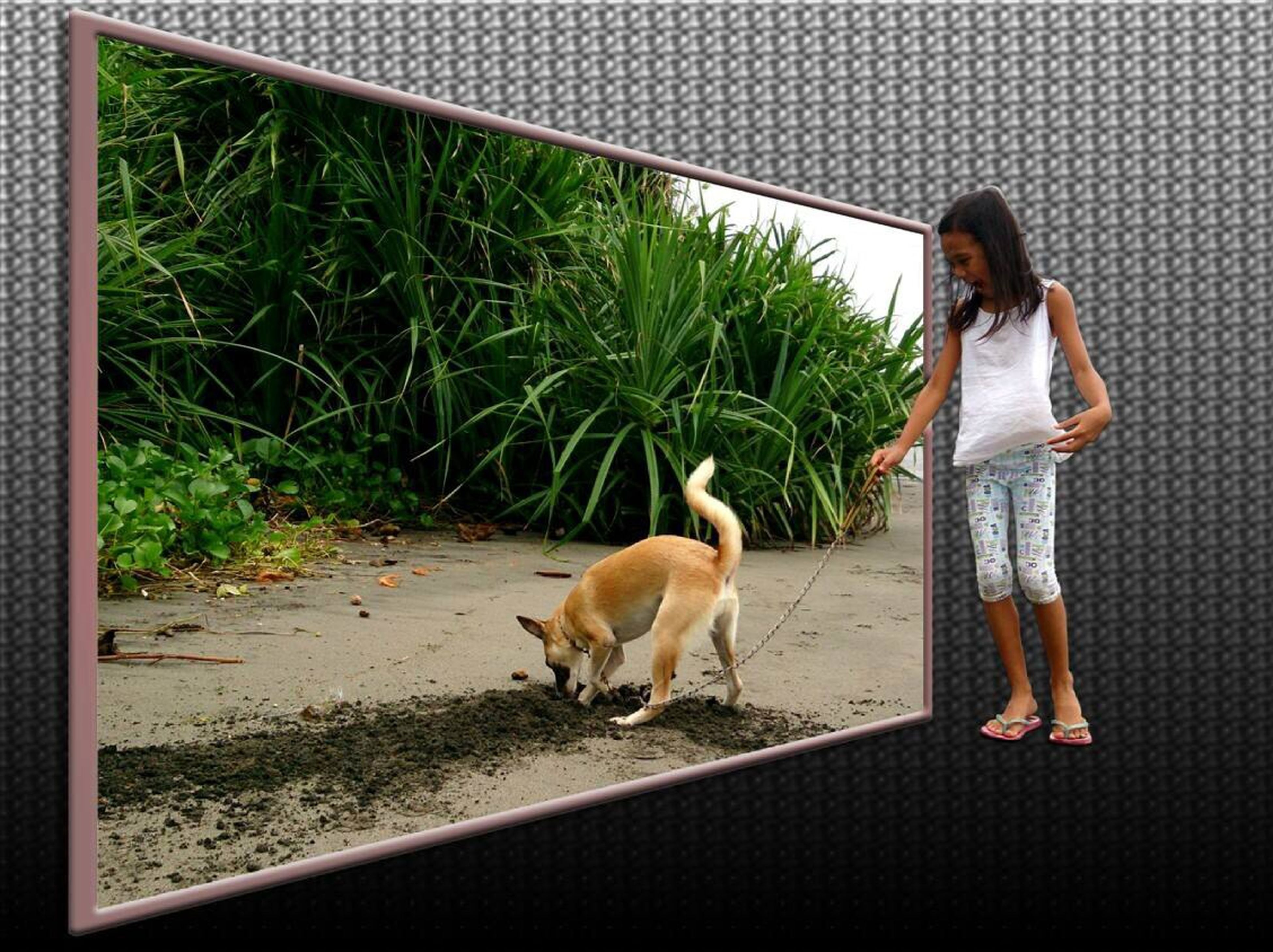 domestic animals, mammal, pets, animal themes, one animal, dog, full length, standing, plant, two animals, transfer print, auto post production filter, sitting, day, pet collar, pet leash, togetherness, walking