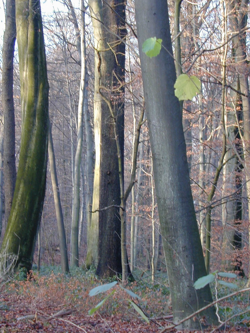 forest, nature, tree trunk, tree, no people, day, tranquility, growth, outdoors, branch, beauty in nature