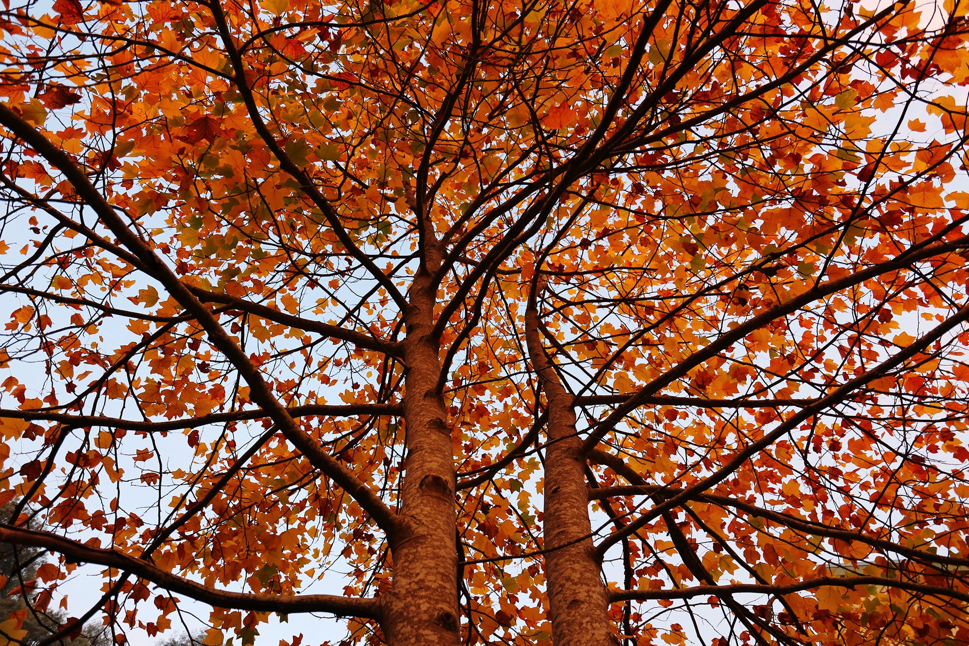 tree, autumn, change, branch, season, low angle view, orange color, growth, beauty in nature, nature, tranquility, leaf, full frame, backgrounds, scenics, yellow, day, outdoors, vibrant color, no people