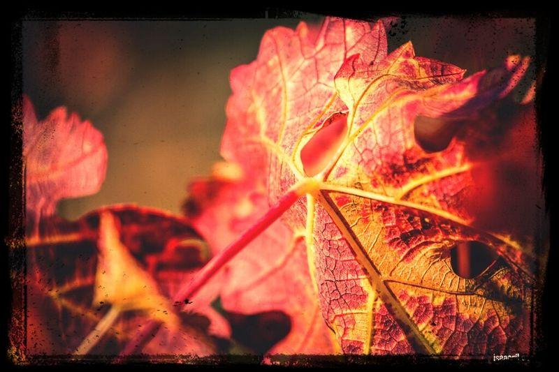 Leaves Macro Autumn Autumn Leaves