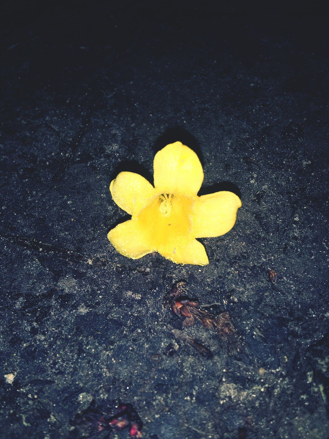 Little Yellow Flower <3 All By Myself..