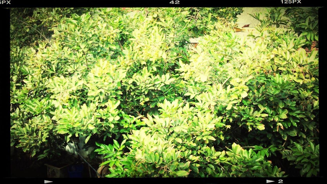 Green Tree's