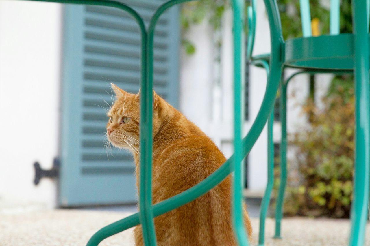 Brown Cat On Sidewalk