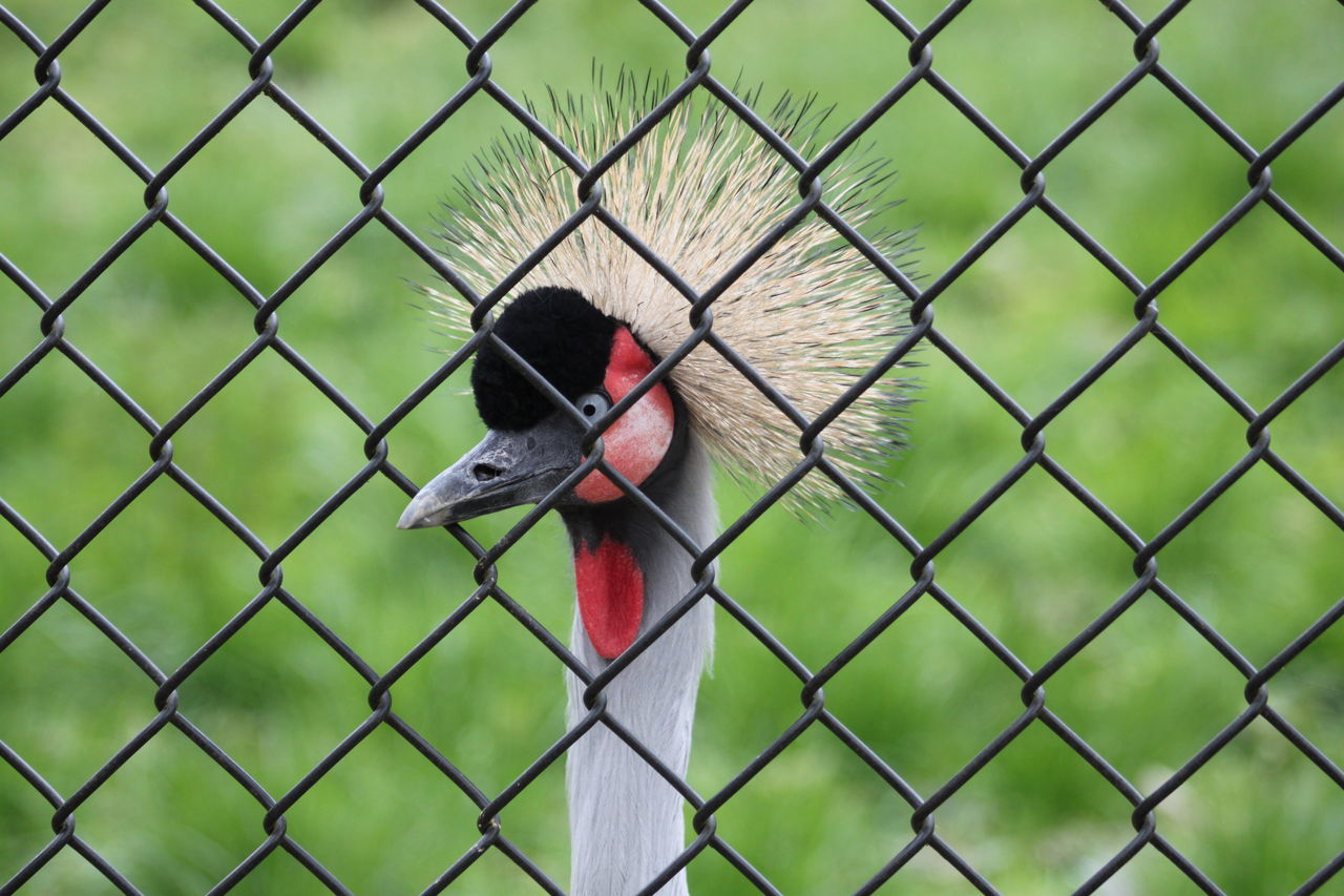 Beautiful stock photos of crowns, National Park, alertness, animal Behavior, animal Body Part