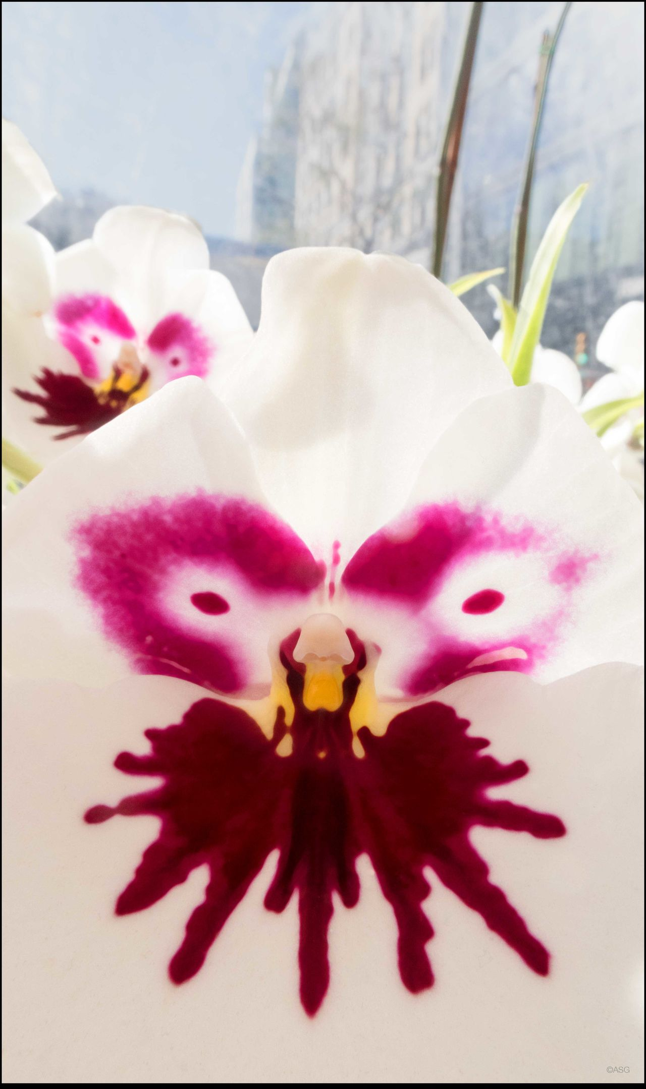 Face in the Crowd Abstract Close-up Elégance Focus On Foreground Fragility Miltonia Orchid Petal Selective Focus Shot 11/14/15 Softness Union Sq. Mkt.