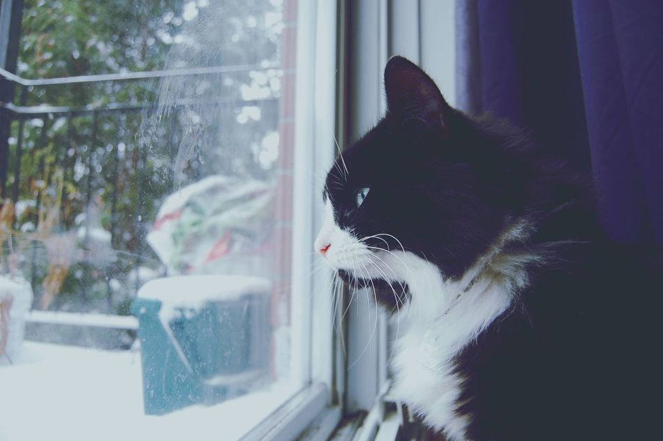 Domestic Cat Pets Domestic Animals One Animal Mammal Animal Themes Window Feline Black Color Cat No People Indoors  Close-up Day Yawning Cats Of EyeEm Cats 🐱 Catsoneyeem Mycat Feline Portraits Felinelover Looking Lookingfoward Mybaby Blackandwhitecat Adapted To The City