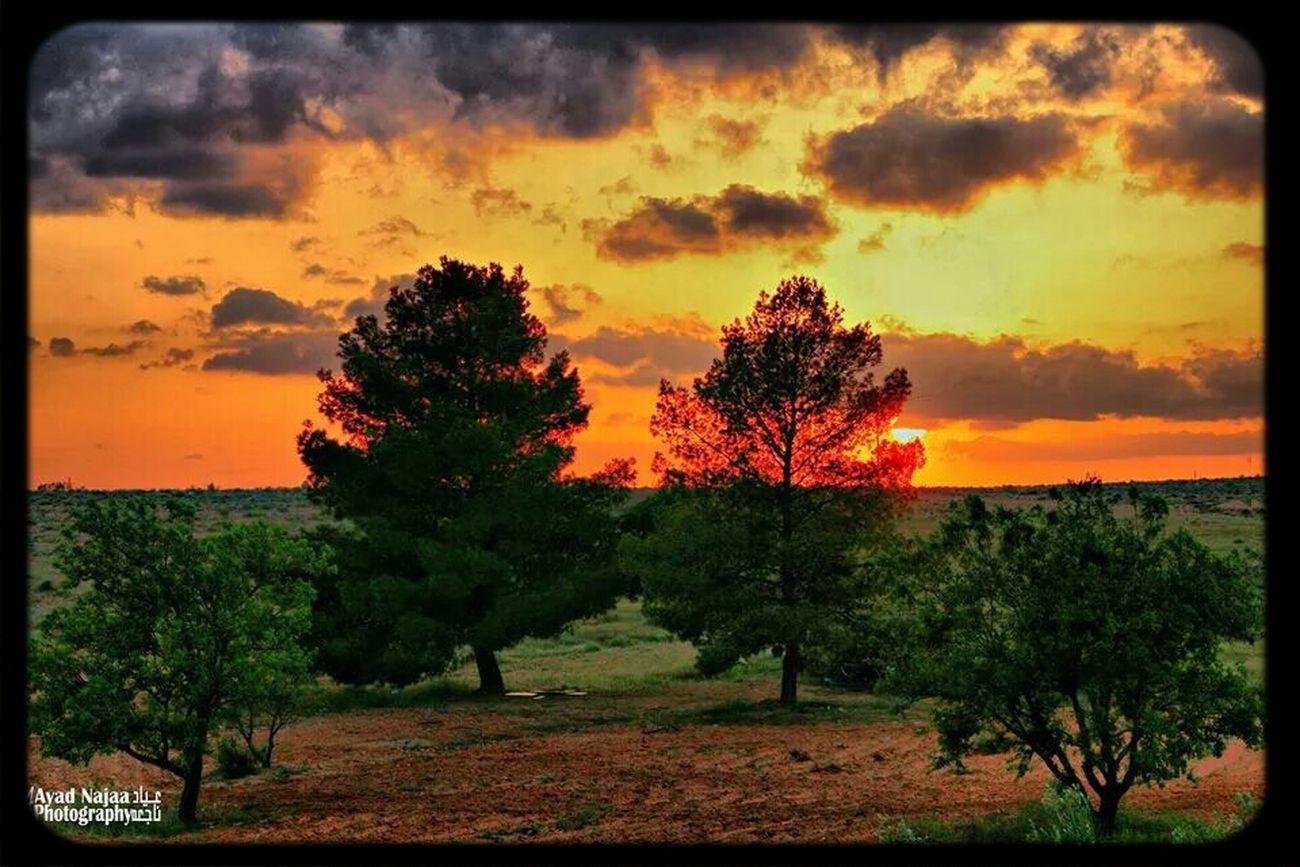 Autumn Colors Libya ✌❤