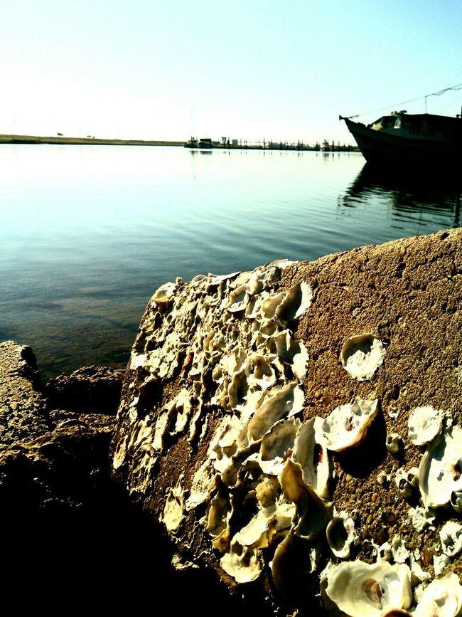 Showcase: December Seaahells Harbor Shrimp Boat Sillouette Ocean Water