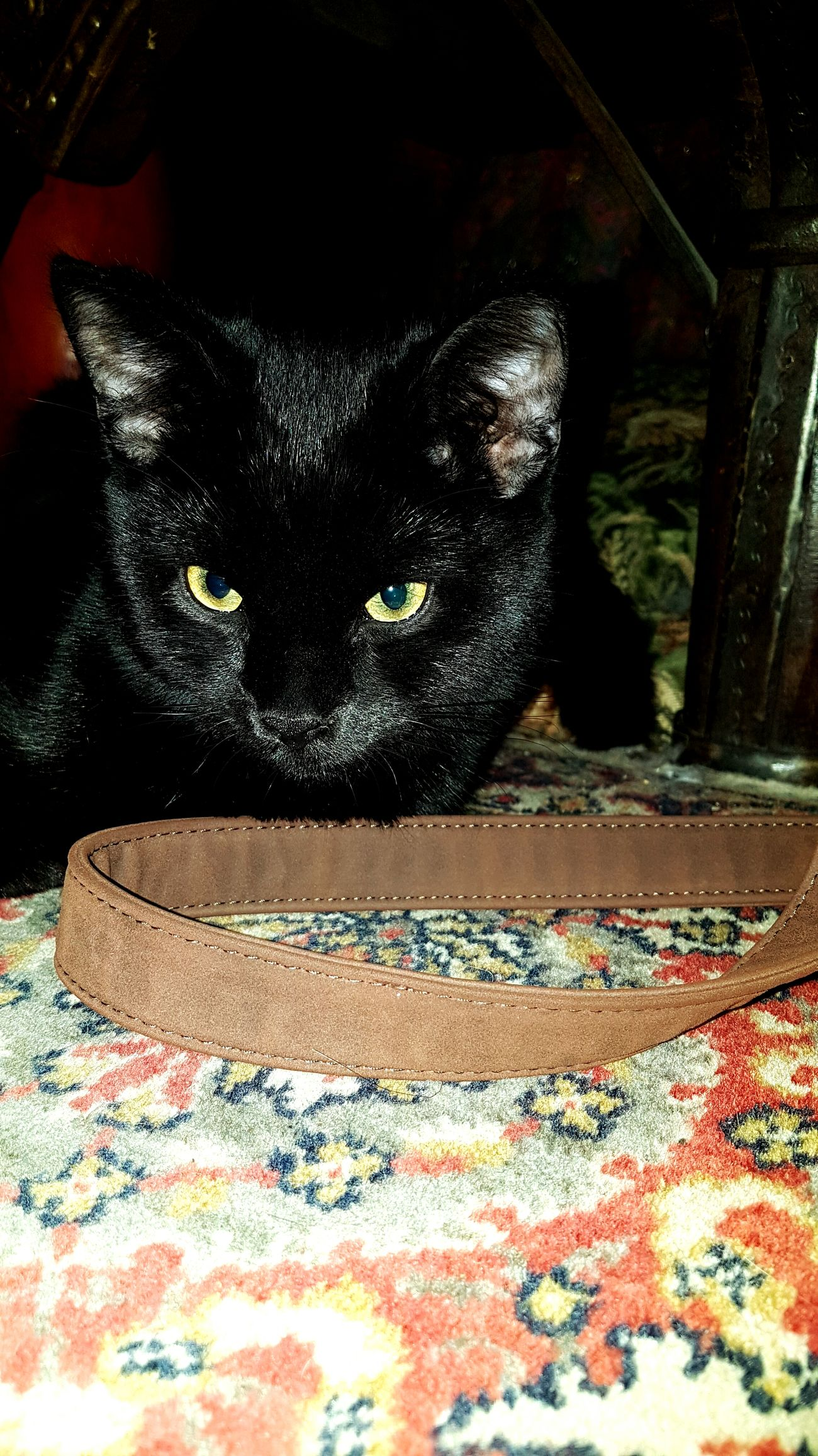 Jos Jedna Divna Maca. 🐱 Meow BLackCat Black Eyes Eyeemcat EyeEmCatlovers Adorable Cats Of EyeEm 💋💋💋💋💋😍😸❤️💖