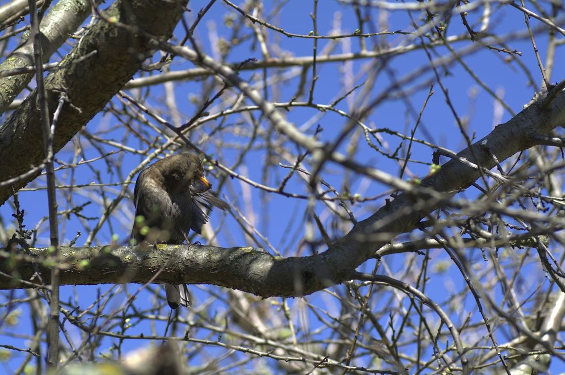 Bird Low Angle View Animals In The Wild Perching Bare Tree Outdoors Animal Wildlife Animal Themes Hardworking Animals Baden Austria EyeEm Gallery Eyeem4photography Nature_collection Capture The Moment Nikon_photography_ EyeEm Nature Lover EyeEm The Best Shots Perfect Moment Perfect Shot Hello World Silence Moment Enjoy The Moment Photography In Motion Beautyofnature Beauty Of Nature... EyeEm Ready   EyeEmNewHere