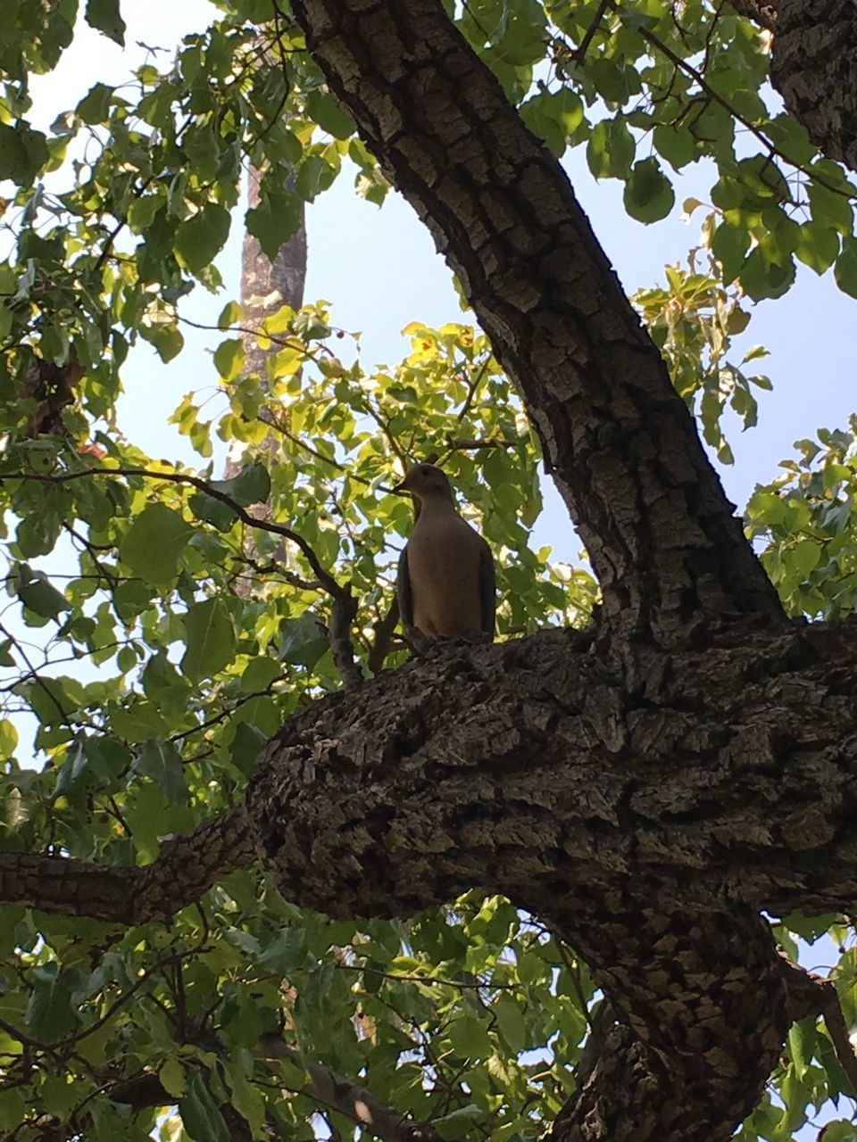 tree, branch, low angle view, growth, tree trunk, nature, outdoors, perching, day, no people, bird, beauty in nature, animal themes, sky