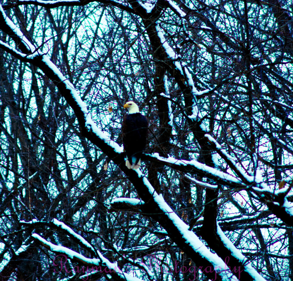 Down By The Creek Creek Naturelovers Connected With Nature Enjoying Nature Beauty In Nature Beautiful Nature Nature Winter Photo♡ Photography Photographer Photography Is My Escape From Reality! Nature Photography The Photographer Ilovephotography Olympus Getolympus Eagle Bald Eagle Birdsofprey