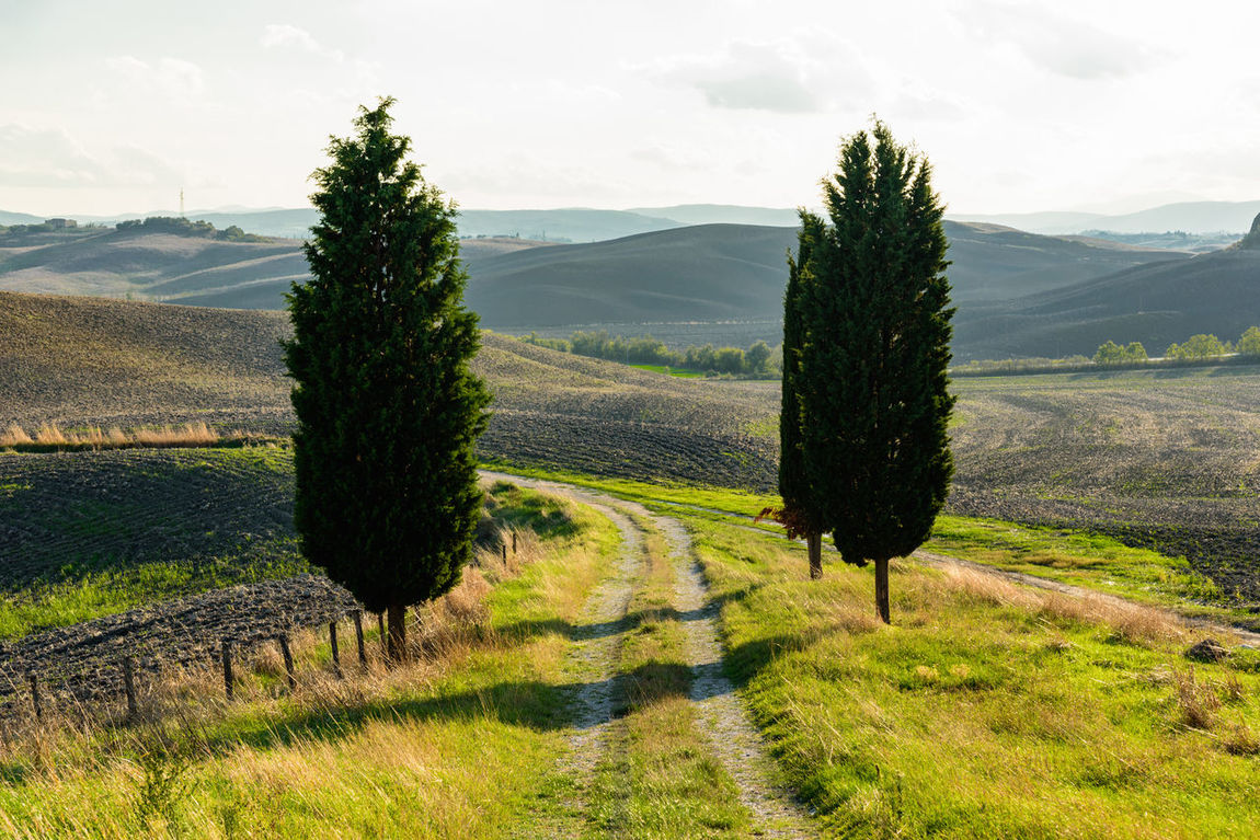 Tuscany countryside during autumn Agriculture Autumn Light Clouds Cypress Growth Hills Landscape Light And Shadow Nature Outdoors Scenics Sky Travel Travel Destinations Tree Tuscany Countryside
