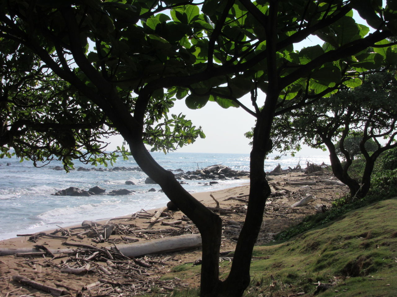 Sea Beach Tree Sand Horizon Over Water Shadow Beauty In Nature Outdoors Silhouette Tree Leaves Kauai Hawaii