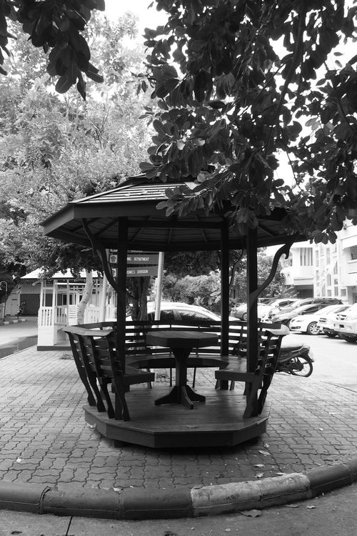 Absence Bench Black & White Blackandwhite Day Empty Growth Nature No People Outdoors Parking Seat Stationary Tranquility Tree