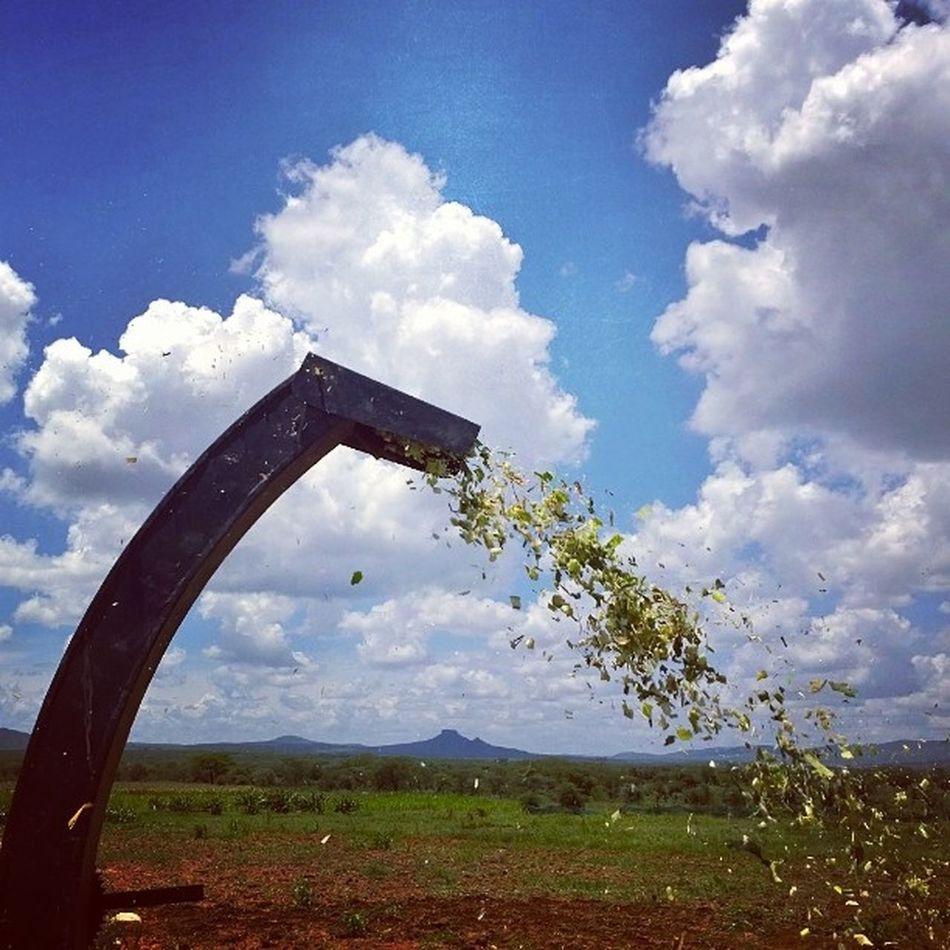 Todayschallenge Forageharvestor Pressure Farmlife maize sky farm themakingofsilage cattlefeed instaclouds Nokia1020 enoughtimefor instagram routine farming Kenya.