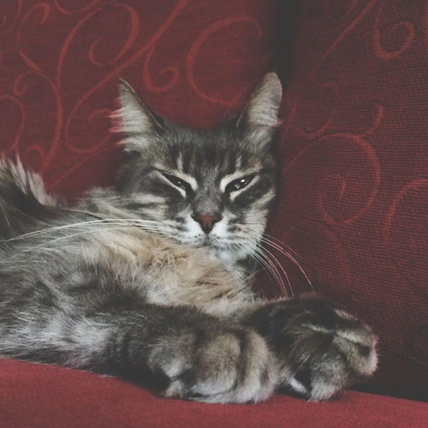 Cat Lovely Courgettes VoilàVoilà !