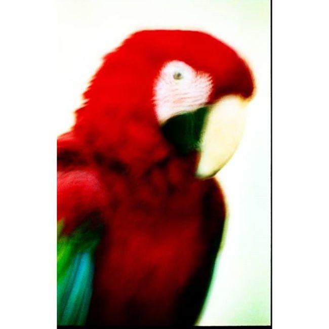 цветвинтерьере Colour Colorpicture Film Filmfoto Analogphotography 35mm Art Photoart Decor Design
