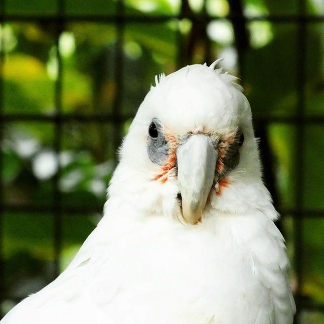 Bird Birds Kakaktua