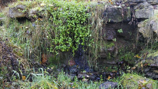 Naturephotography Nature_collection Garden Beautiful Nature Beuty Of Nature Waterfall
