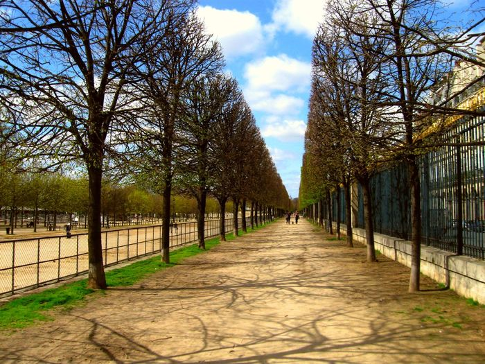 Tree The Way Forward Bare Tree Diminishing Perspective Sky Treelined Day Long Tranquil Scene Nature Outdoors Cloud Cloud - Sky Tranquility Branch Park Paris Paris, France  Paris ❤ Straight