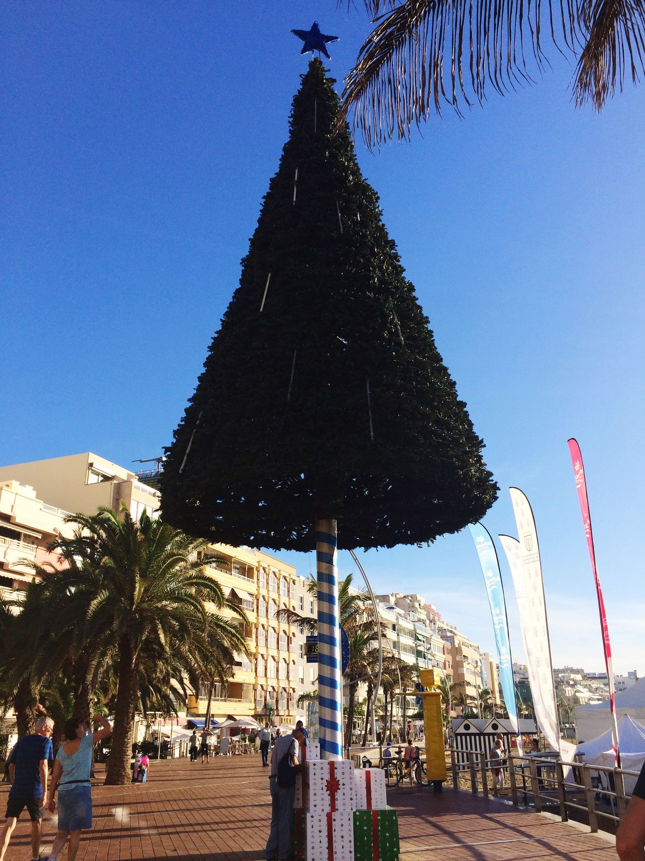 December Christmas Tree Gran Canaria Sunshine Lovely Weather Las Palmas De Gran Canaria Clear Sky