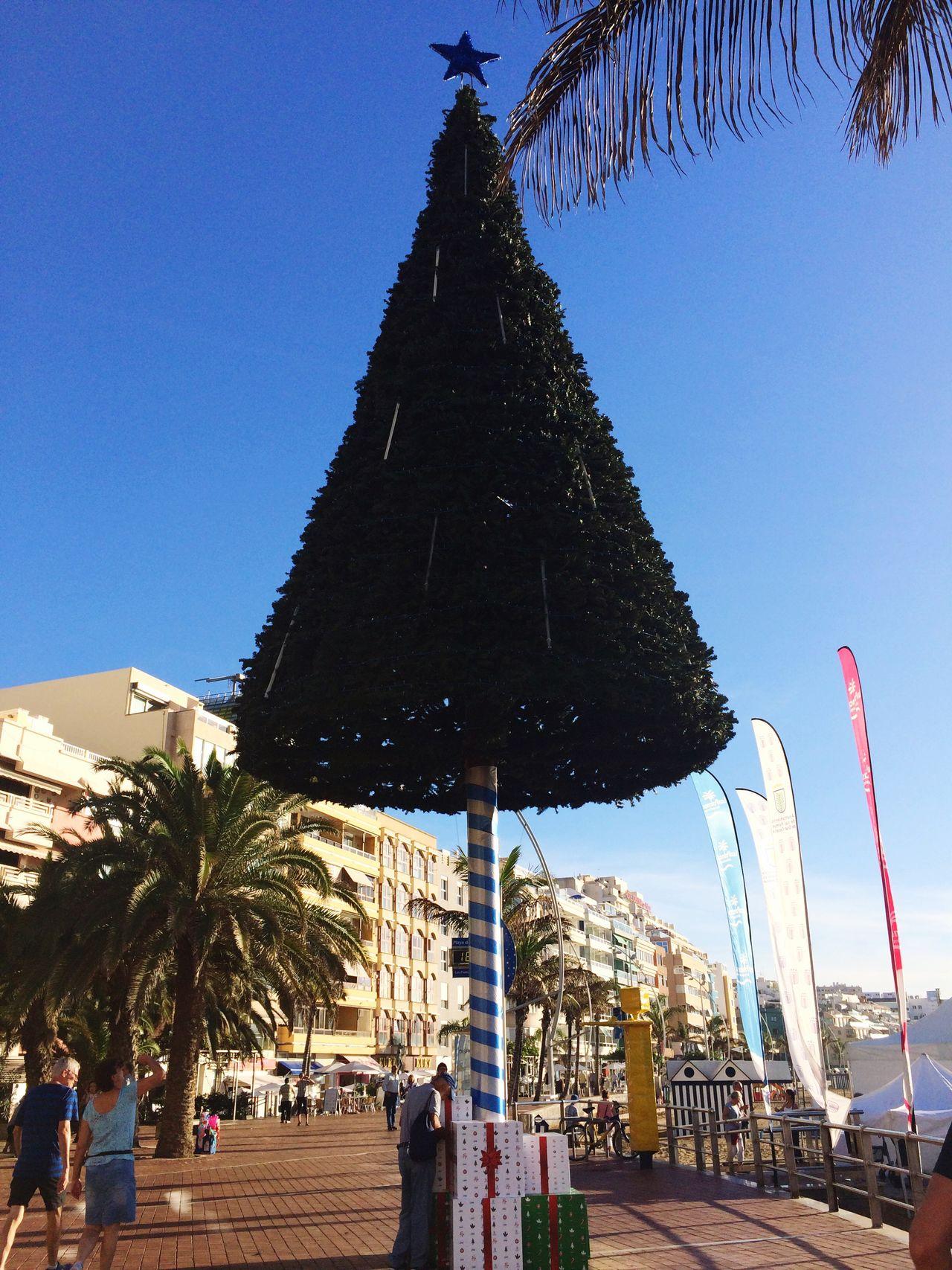 December Christmas Tree Gran Canaria Sunshine Lovely Weather Las Palmas De Gran Canaria Clear Sky
