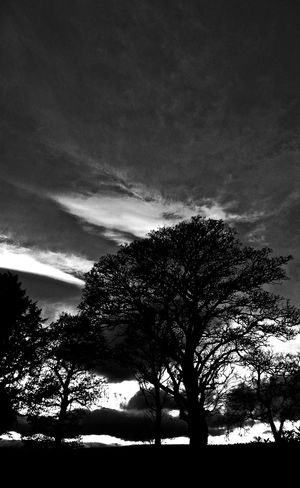 Dramatic tree composition. Atmospheric Mood Cloudy Dramatic Sky Light Moody Sky Outdoors Silhouette Sky Sunset