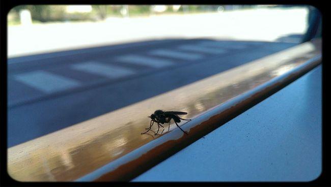 cuca Bugs Nature Enjoying Life Eye For Photography