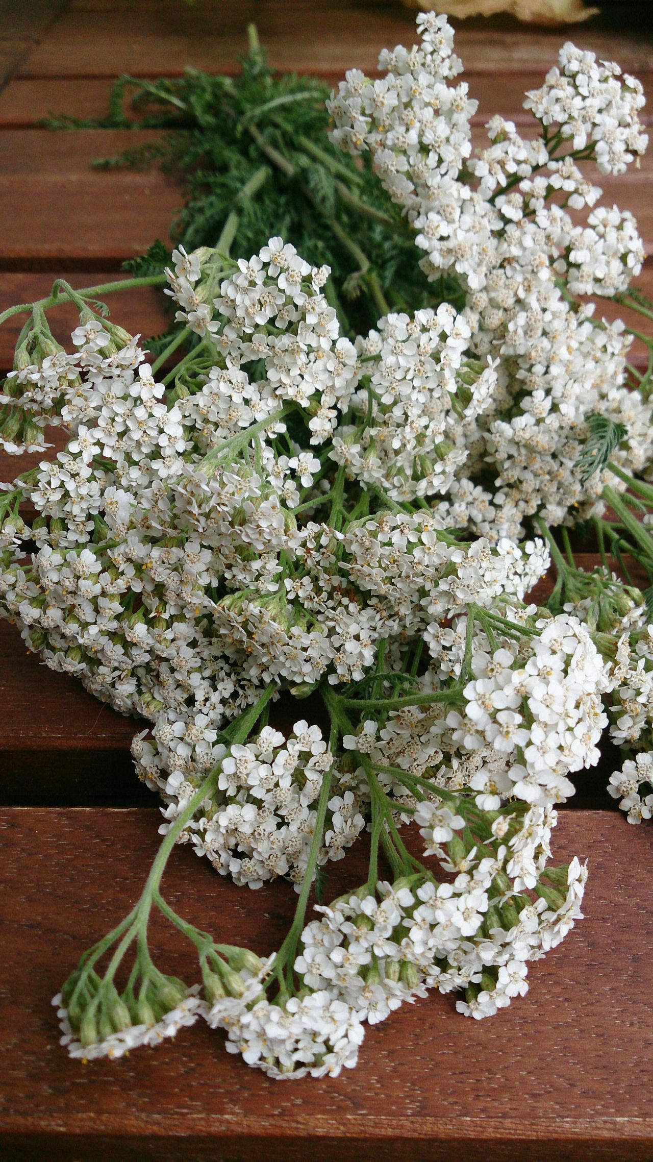 Freshness Close-up Food Indoors  No People Day Flower Head Herbal Healthy Gathering Harvest Beauty In Nature Yarrow Nature EyeEmNewHere