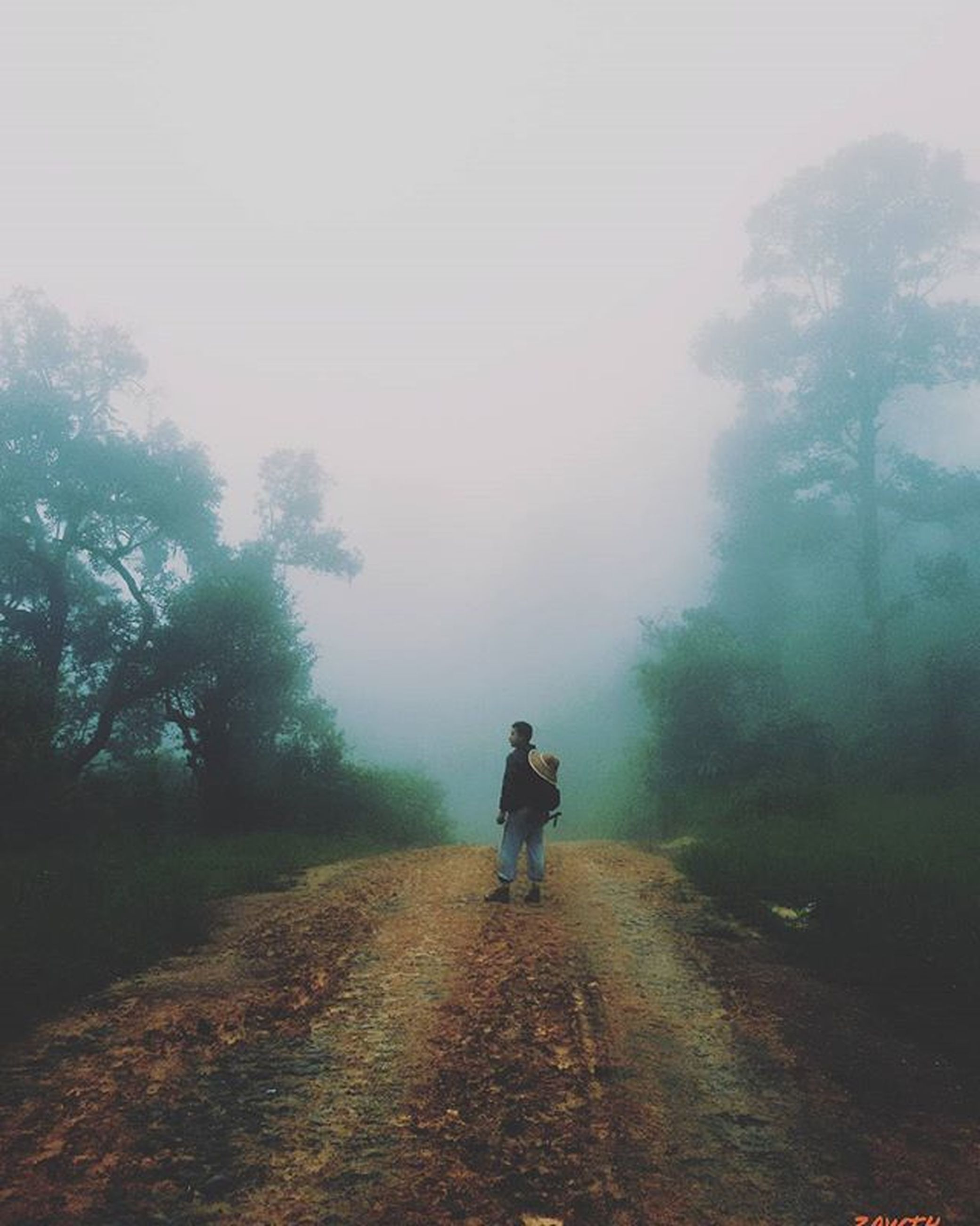 rear view, full length, the way forward, tree, lifestyles, walking, men, leisure activity, dirt road, fog, diminishing perspective, nature, tranquility, landscape, tranquil scene, vanishing point, sky, transportation