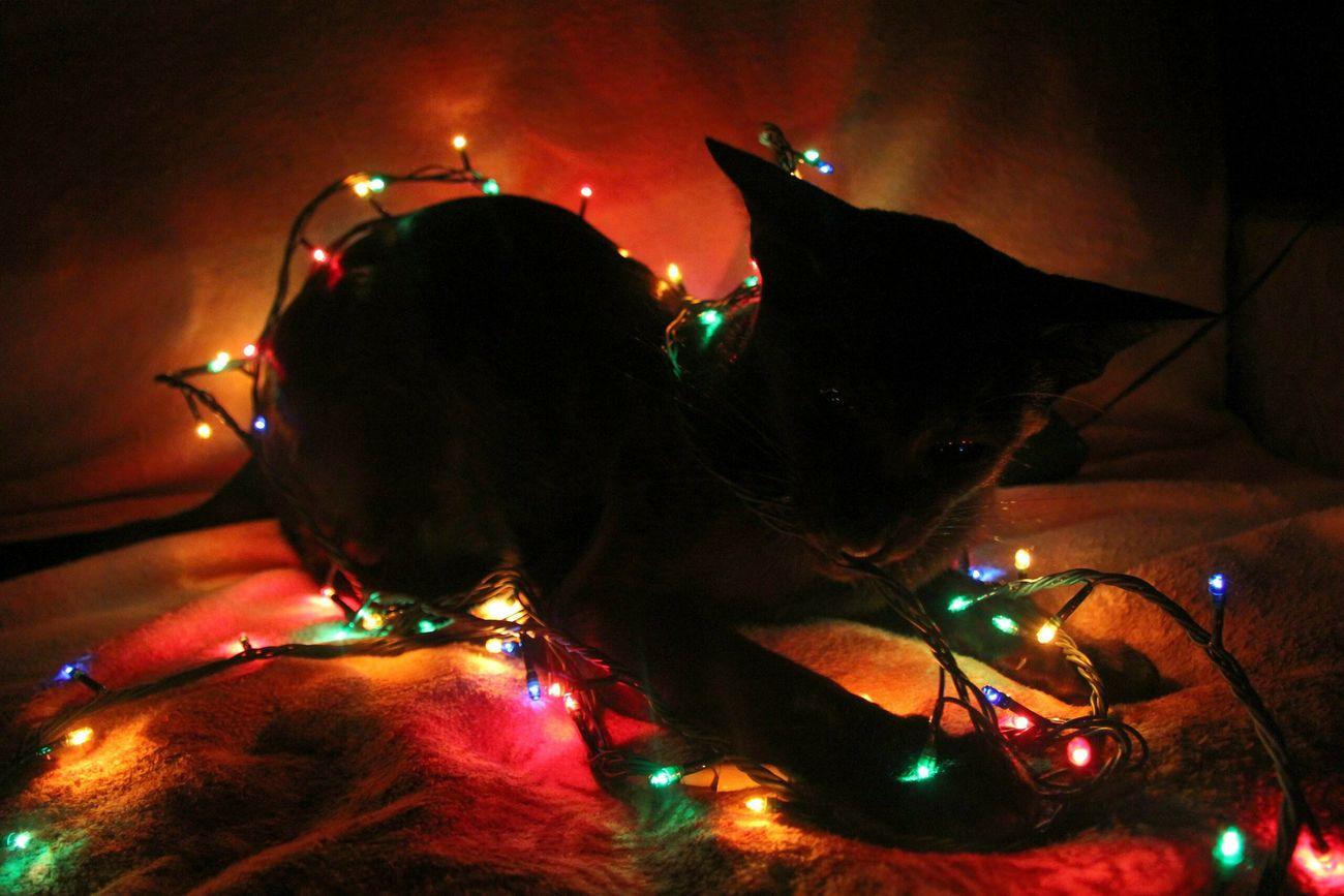 Illuminated Performance Cateyes Cats 🐱 Cats Of EyeEm Cat Lovers Cat Christmas Decoration Christmas Christmas Lights Winter No People