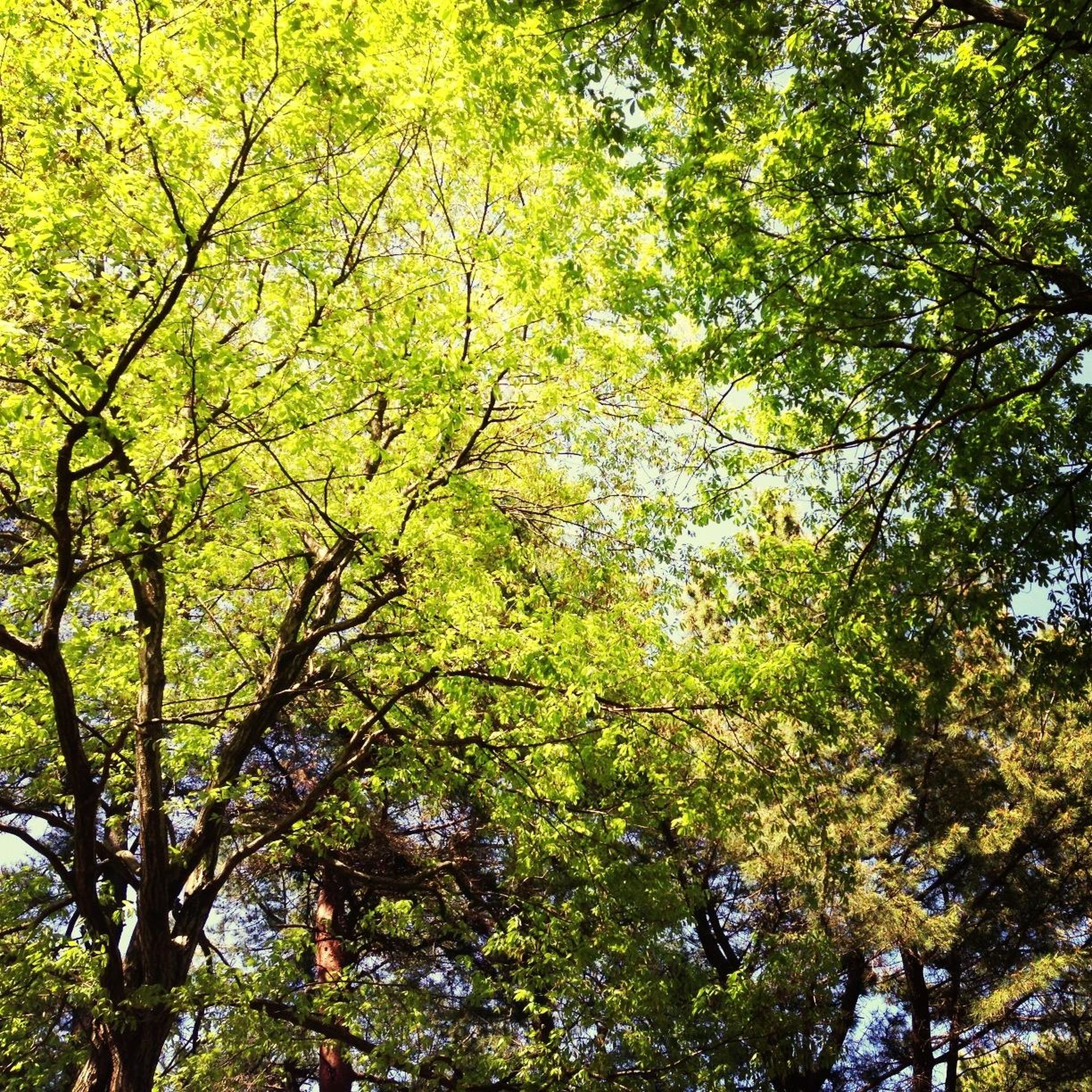 tree, branch, growth, low angle view, green color, nature, tranquility, beauty in nature, lush foliage, forest, full frame, scenics, backgrounds, tranquil scene, leaf, day, green, outdoors, no people, sunlight