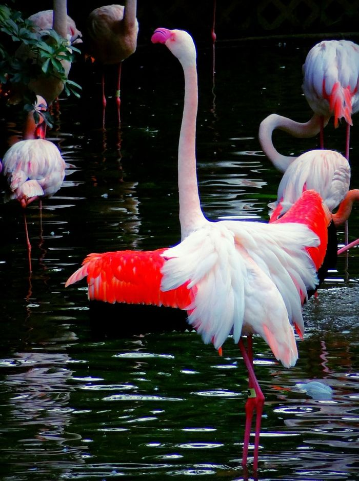 Hello World EyeEm Nature Lover Check This Out l just want to dance Protecting Where We Play Hot Pink Lips 😄