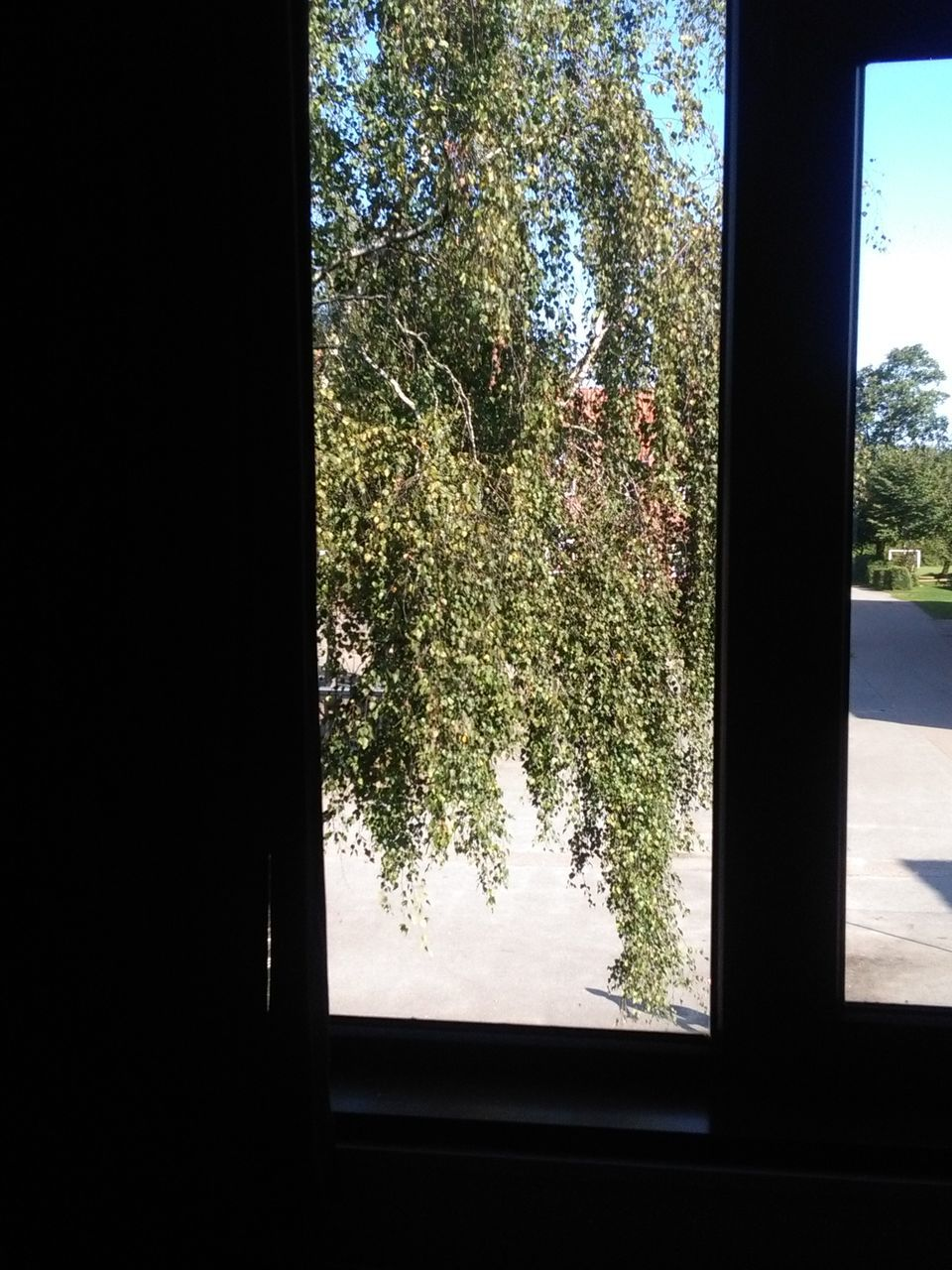 window, tree, glass - material, indoors, growth, no people, nature, day, looking through window, sky, branch, close-up, beauty in nature