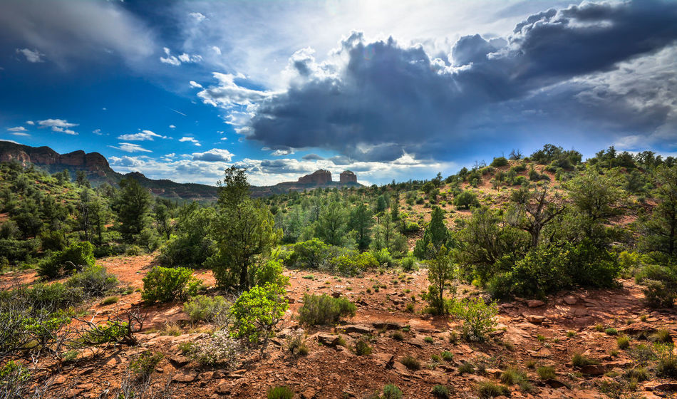 Beautiful stock photos of phoenix, Arizona, Beauty In Nature, Bush, Cloud