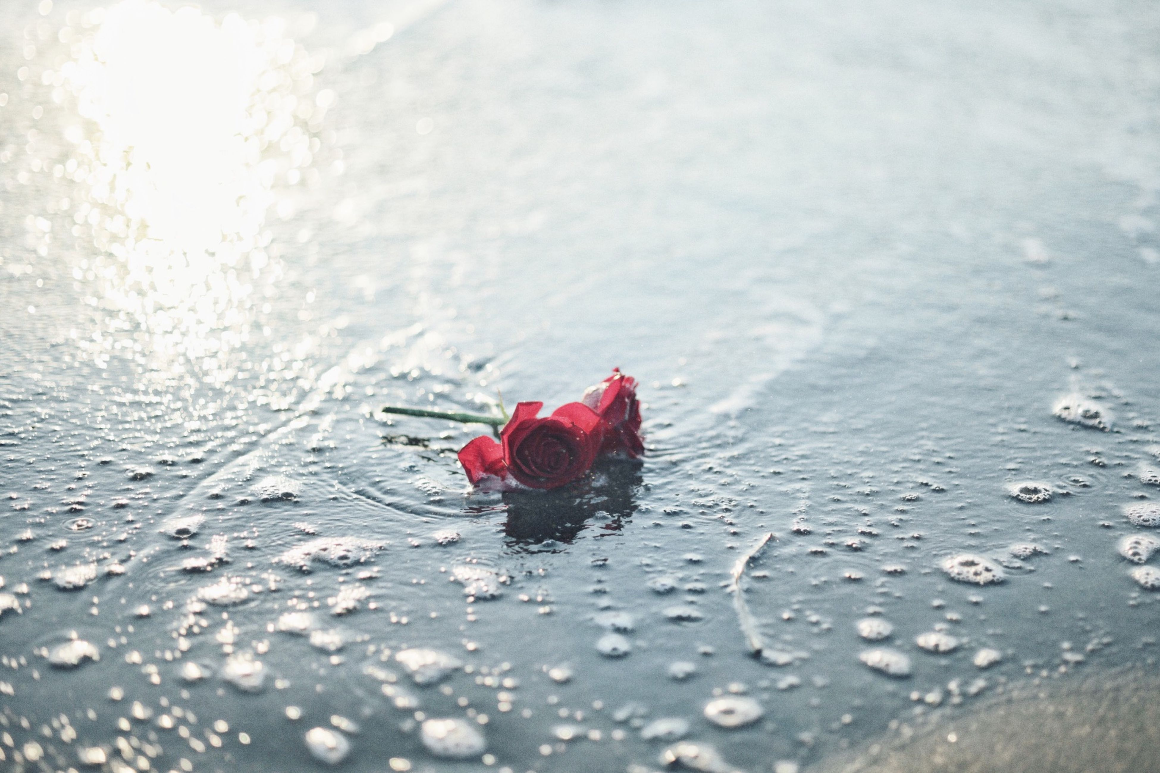 red, water, wet, weather, nature, season, drop, outdoors, day, flower, reflection, rain, beauty in nature, leaf, close-up, fragility, selective focus, freshness, one animal, pink color