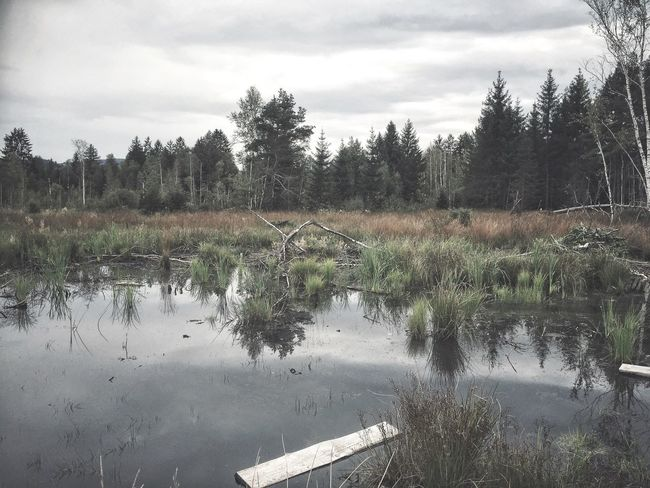 Water Tree Reflection Plant Nature Beauty In Nature Cloud - Sky Cloud No People Rainy Days Bog Marsh Swamp Log White Wood Hiking Adventures Grass Black Water