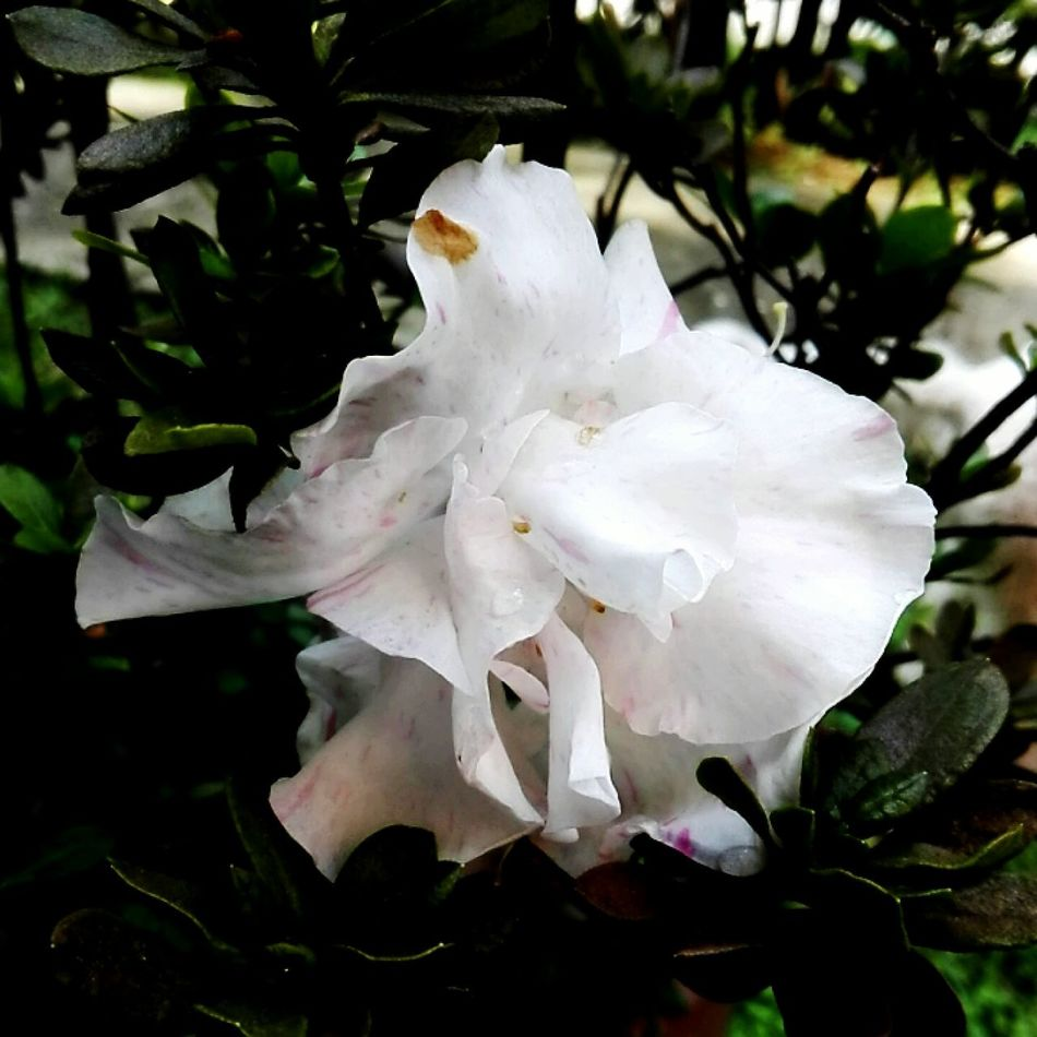 Growth Plant White Color Beauty In Nature Nature Flower Head Freshness No People Fragility Freshness Day Outdoors Flower Photography CALI COLOMBIA Love Picoftheday Green Color Growth Nature