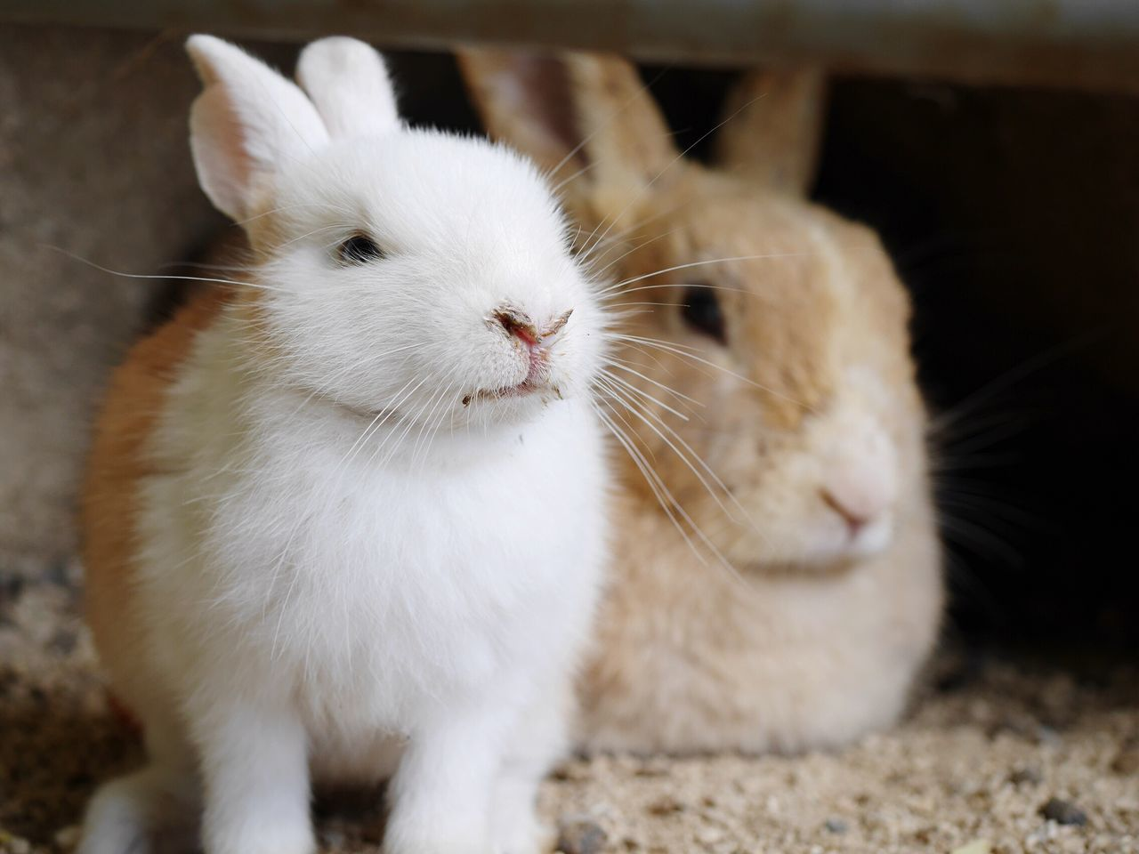Nature Photography Rabbits 🐇 Rabbits Rabbit Japan Photography Rabbit ❤️ Animal Animal Themes Animals In The Wild Animals Animal Wildlife Pretty Parent And Child
