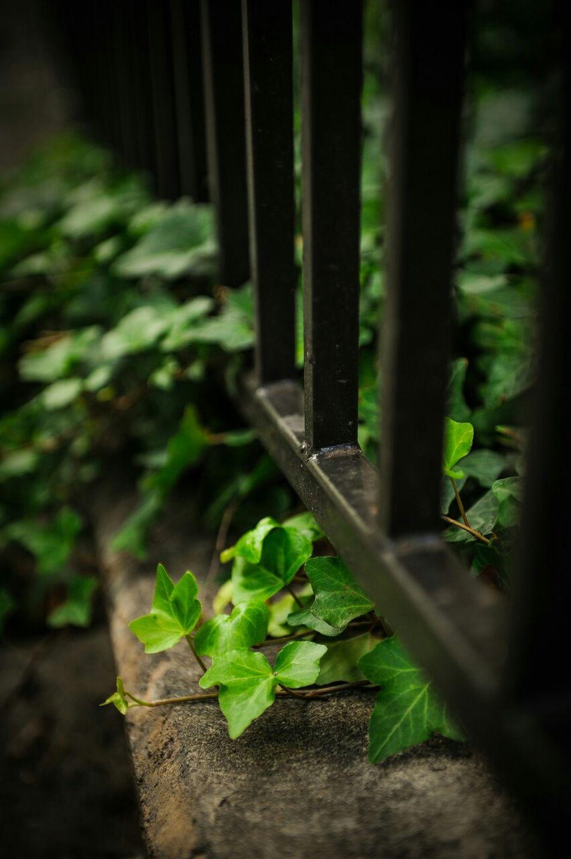 Feelingsosmall Scared Green Emotional