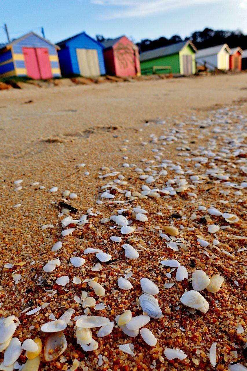 Close-Up Of Seashells On Shore At Beach